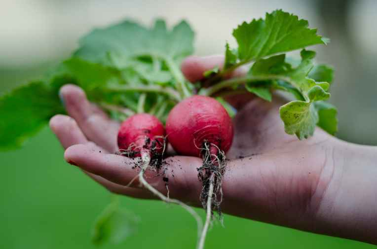 healthy vegetables hand gardening