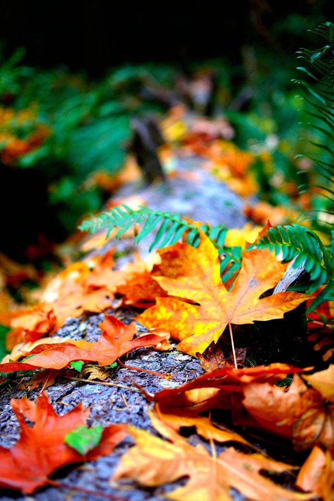 Cette image a un attribut alt vide; le nom du fichier est close-up-photo-of-dry-leaves-14774597819047207814202460.jpg